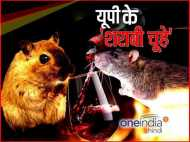 बरेली: थाने के मालखाने से 800 लीटर शराब गायब, पुलिस ने चूहे को बनाया आरोपी!