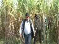 हापुड़ : गन्ने के खेत में पड़ा मिला युवक और युवती का शव, 1 दिसंबर से थे लापता