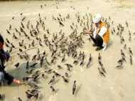 कजरारी चिड़ियों के साथ एक भूतपूर्व फौजी की दोस्ती, वीडियो देख कहेंगे WOW