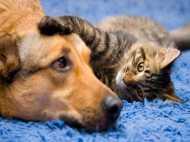बेजुबान जानवरों के साथ क्रूरता, जहर देकर 14 कुत्ते और 6 बिल्लियों को मारा
