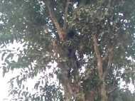 गरीबी ऐसी कि खाना बनाने के लिए बच्चा पत्ता तोड़ने पेड़ पर चढ़ा लेकिन वहां मिली मौत