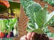 गुजरात में कृषि विभाग में हुआ सबसे ज्यादा भ्रष्टाचार, ACB के ये आंकड़े चौंकाने वाले