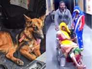 बहू के इलाज के बदले दिए कम पैसे तो डॉक्टर ने सास पर छोड़ा कुत्ता