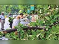 5 सालों में गुजरात में पौने 10 लाख पेड़ काट डाले गए, फिर चढ़ सकती है 51,000 की बलि