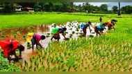 गुजरात: बारिश से कृषि की आई बहार, 80 लाख हेक्टेयर भूमि पर हुई बुवाई, इन फसलों पर ज्यादा जोर
