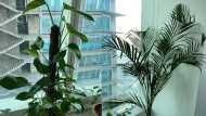 दिल्ली की जहरीली हवा से बचने के लिए घर में लगाएं ये पौधे, अब इससे सस्ता उपाय नहीं हो सकता