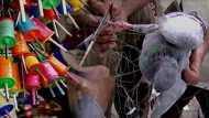 पतंगबाजी जानलेवा: गुजरात में मांझे से 200 लोगों के गले कटे, सैकड़ों पक्षी मरे, 2000 से ज्यादा जख्मी हुए
