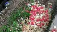 Fact Check: क्या सच में कंडोम के ढेर की यह तस्वीरें शाहीन बाग की हैं?
