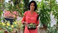 बिना मिट्टी के घर की छत पर फल-सब्ज़ी उगा रही हैं पुणे की ये महिला, जानिए कैसे