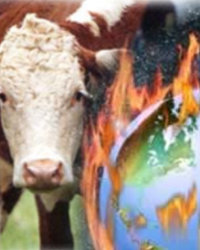 Global Warming Cattle