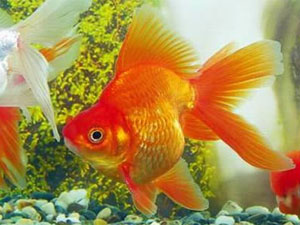 Astrology for Dream interpretation fish