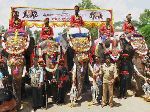 मैसूूर दशहरा उत्सव के हाथियों का भी हुआ इंश्योरेंस जानिए क्यों