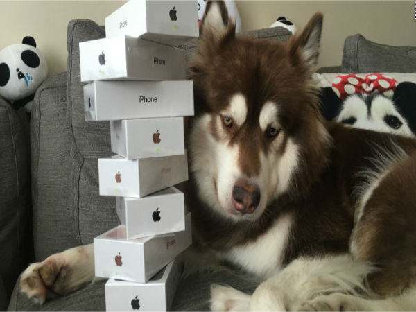 Son of China's richest man buys eight iPhone 7s for his dog