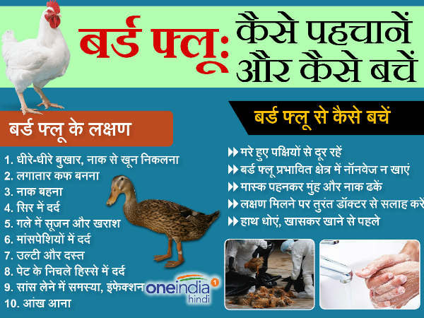 Bird Flu: Symptoms, Treatment and Prevention in Hindi
