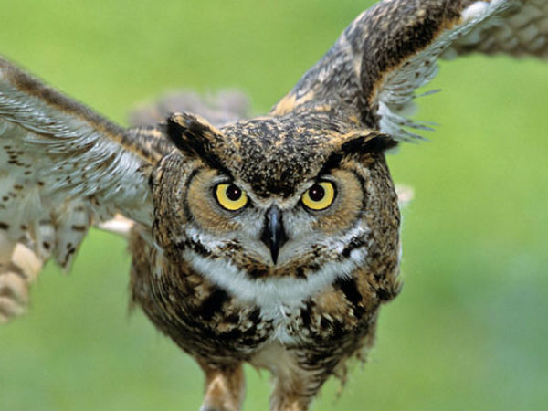 Why Diwali is black day for Indian's Owls