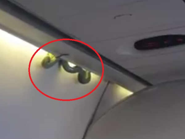 Snake spotted on a flight in Mexico, creates panic among passengers