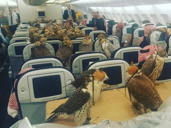 Saudi prince buys 80 plane tickets for unusual guests