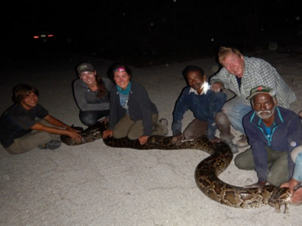 Snake hunters from India went to florida to hunt pythons---