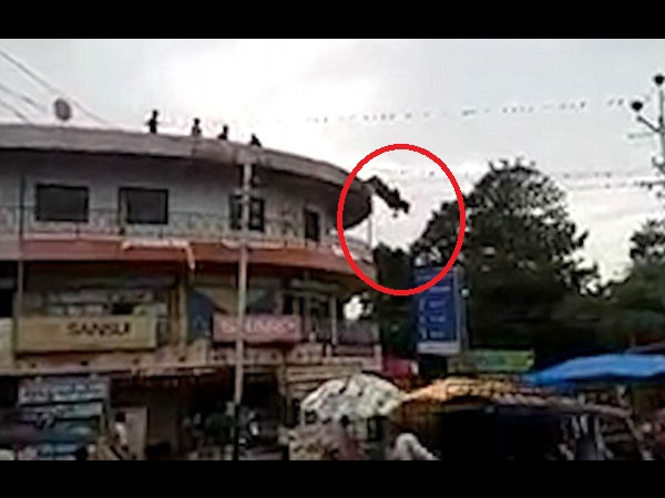 Shocking moment a cow leaps to its death when it does a somersault off the roof of a building