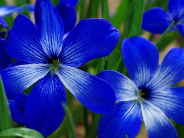 Image result for नीला 'रंग