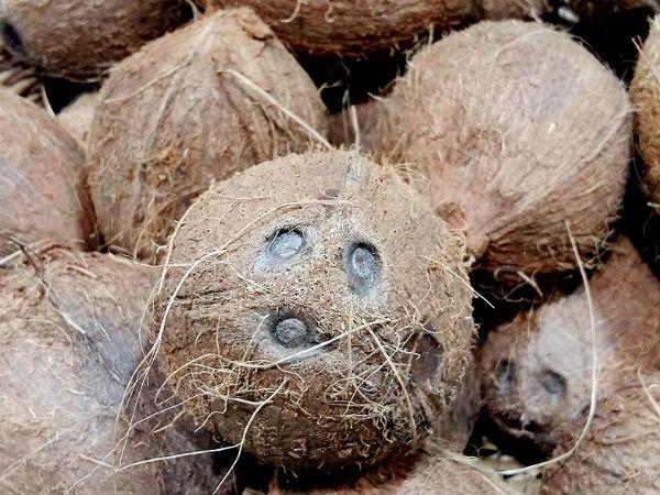 एकाक्षी नारियल के चमत्कार जानकर हैरान हो जाएंगे आप | Astrological Facts  related to coconut in Hindi - Hindi Oneindia
