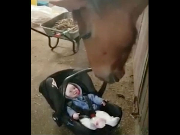 Horse turns babysitter by soothing crying baby girl by making her giggle as he rocks her car seat