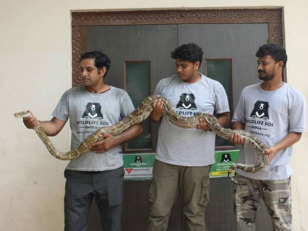 8-foot-long Python trapped in Air Force aircraft at Agra Air Force
