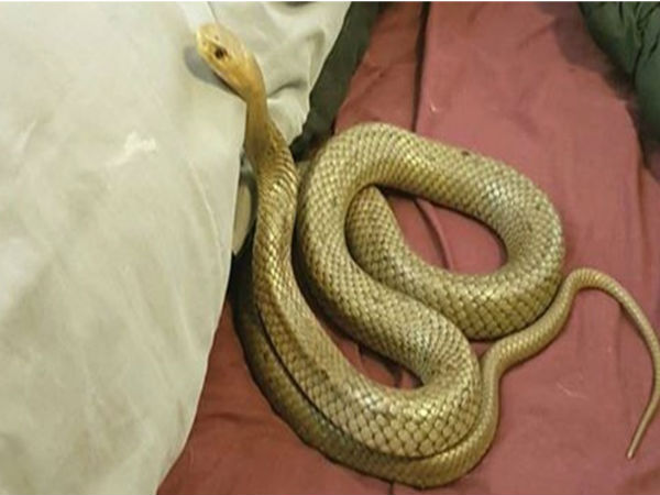 couple spots VENOMOUS SNAKE in bed; VIRAL photos will scare you to death