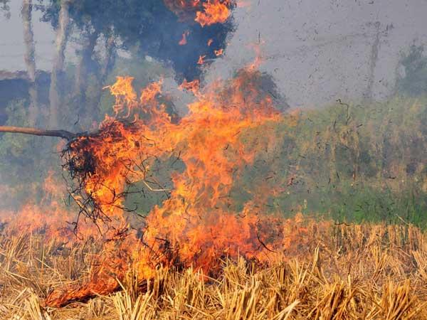 दिल्ली को प्रदूषण से बचाने के लिए हरियाणा पंजाब के किसानों से पराली खरीदेगी सरकार