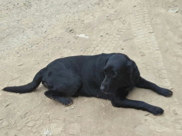 family will give 10000 rupees and a I phone who will search his lost dog varanasi