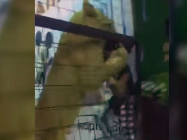 Watch: Children Were Allowed Into A Lion's Cage. Then, A Girl Was Attacked