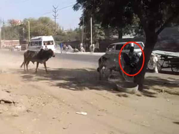 Life of a young man in Agra battle two bulls