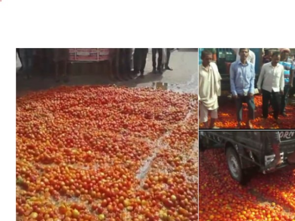 Bihar rohtas farmers threw away tomatoes on road