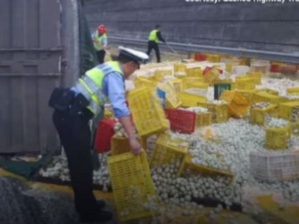 Video china 1 Lakh Eggs Crack Open On Highway After Truck Flips Over