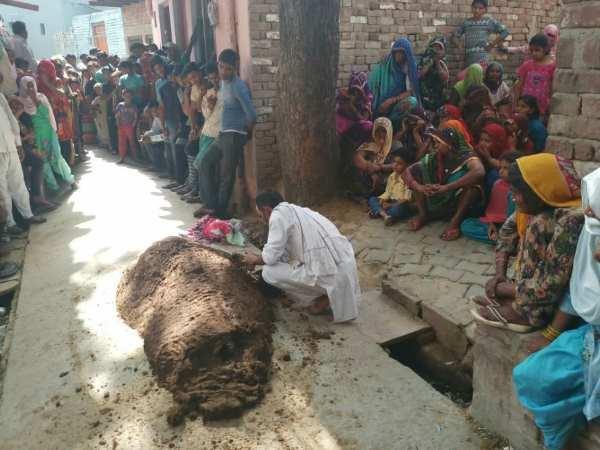 Woman After Snake Bite Kept Inside Dung Died Bulandshahr