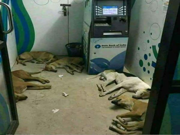 varanasi cashless atm are the new house of dogs