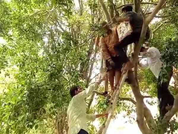 A woman climbed on tree in Mathura after officers ignored her
