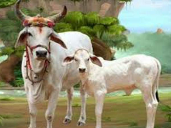 Image result for गाय ,कुत्ते साधू को रोटी दे