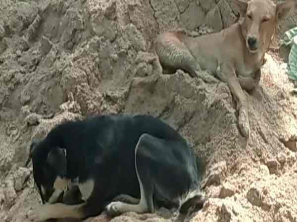 Students not going to school due to fear of dogs in Farrukhabad