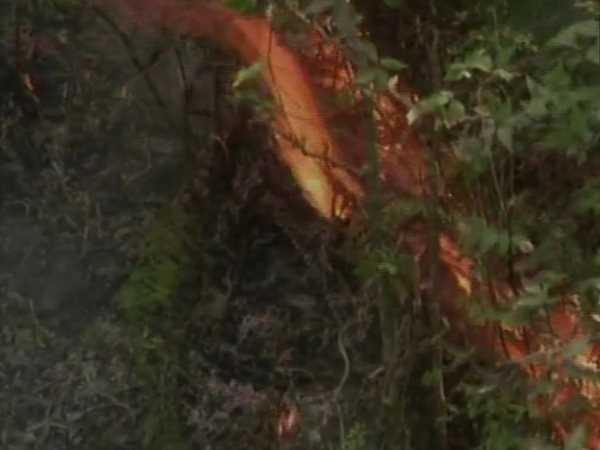 four people burnt death in forest in Shimla