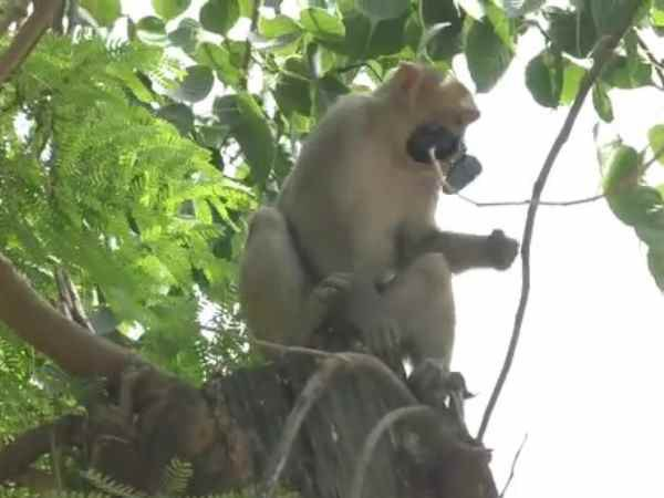 A monkey theft glass of police inspector in Shahjahanpur