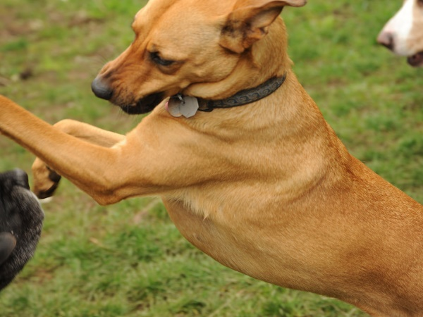 आवारा कुत्तों के हमले से 18 महीने के मासूम की मौत, नोंच-नोंचकर लहूलुहान कर दिया था शरीर