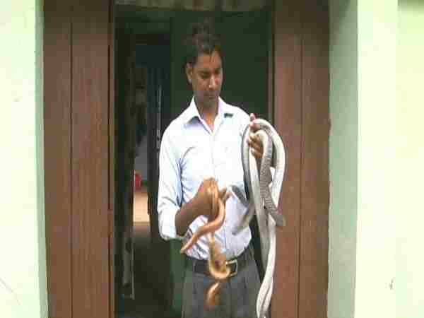 A Man Who Is Making Snakes His Friend In Hardoi