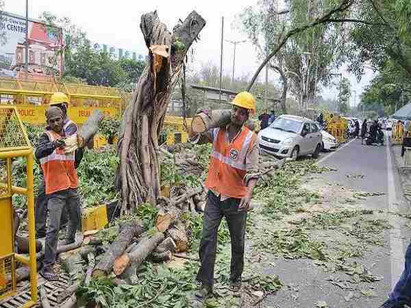 Cutting of trees for re development in Delhi NGT fixed 27 july for next hearing