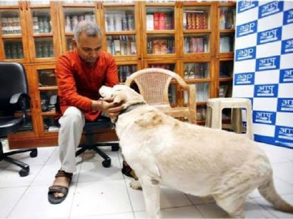 Somnath Bharti Pet Dog Dies, was Wanted In Domestic Violence Case once