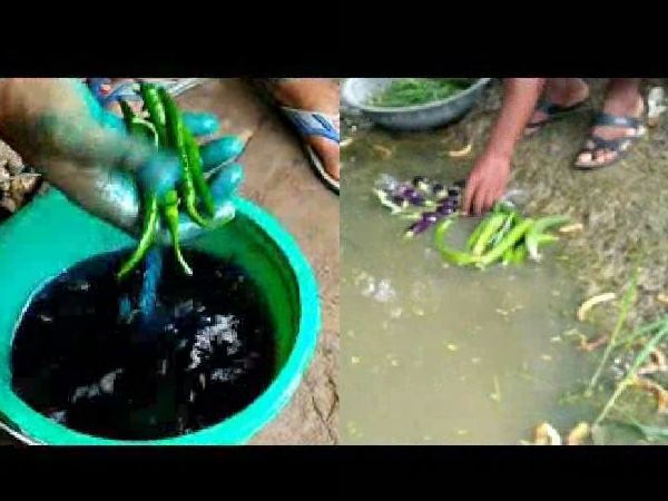 kanpur This video will tell the vegetables which you are eating as green and fresh, how poisonous they are