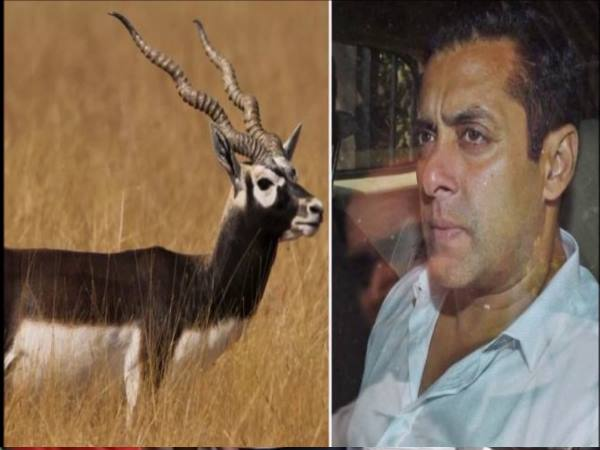 jodhpur Deer hunting case: Salmans plea against the punishment was not heard incomplete