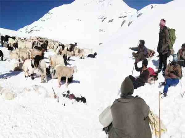 50 sheperds are missing in himachal pradesh kangra district due to sudden snowfall