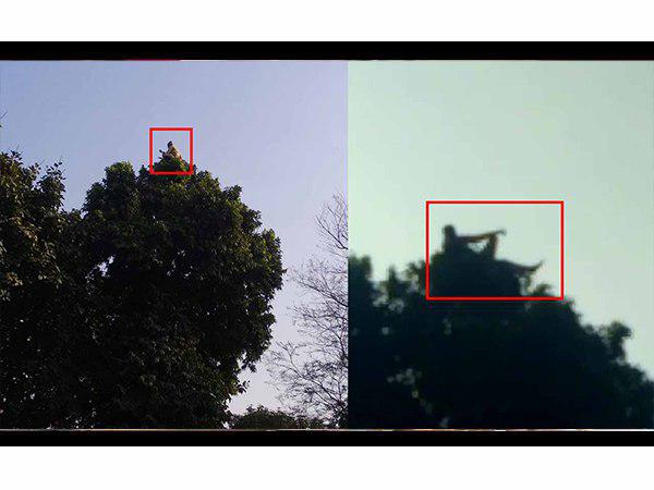 video goes viral of baba sitting on the top of tree in bahraich up