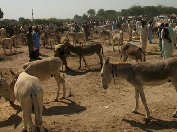 Image result for gadho ki abadi